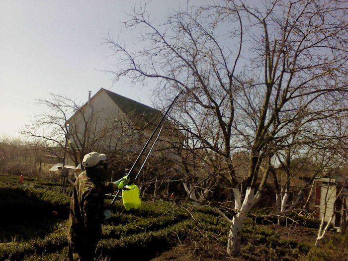 Обприскування дерев