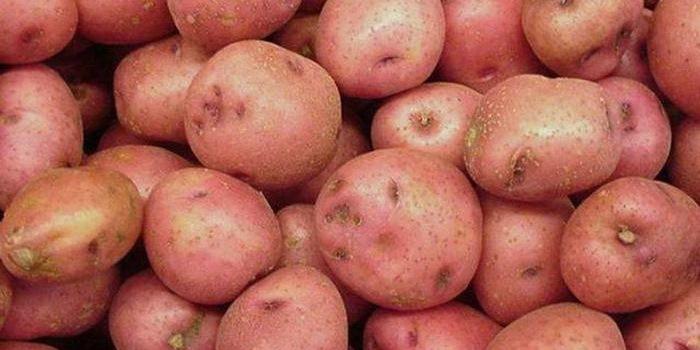 Сорт картоплі української селекції Бородянський рожевий