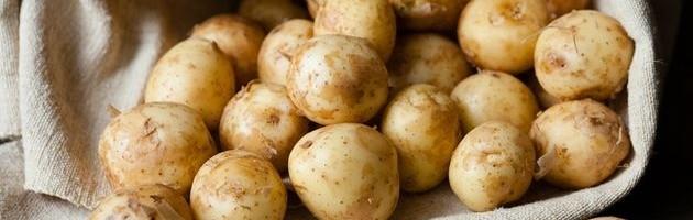 Як отримати ранню молоду картоплю