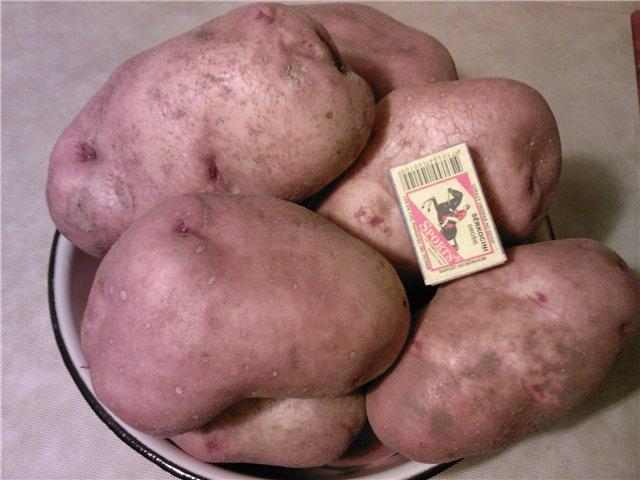 Сорт картоплі Слов'янка