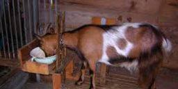 Годування сільськогосподарських тварин взимку