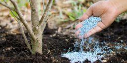 Чем подкармливать садовые растения весной